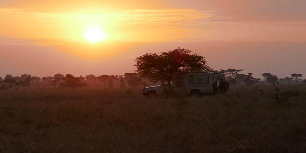 pure safaris