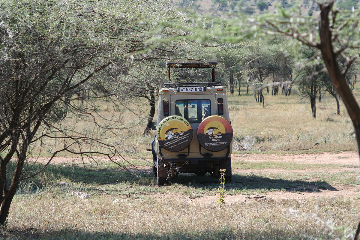 safaris tansania